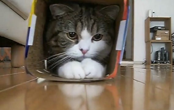 cat-video-festival-maru