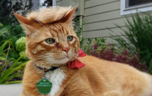 trump-your-cat