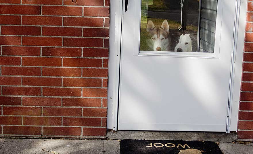 dogs-at-front-door